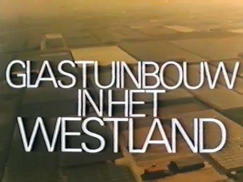 Glastuinbouw in het Westland