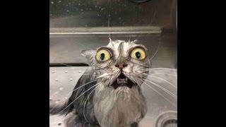Cat Fails- BEST COMPILATION 2015 funny (animal fails)
