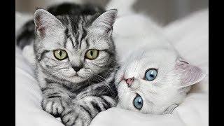 Что делает кот, пока вас нет дома #1