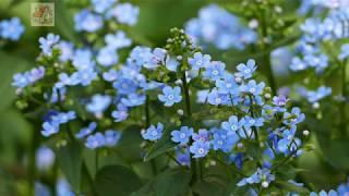Видео-фототест  Panasonic Lumix FZ 1000// Съемки: природа, весна, цветы, немного о животных)))