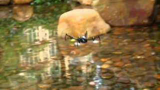 Video for RC107-Inverted Flight Drone-RC DRONE