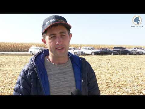 TV-4: Кращі гібриди кукурудзи та цукрового буряку України визначили на Тернопільщині