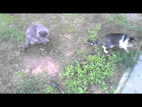 House cat, street cat
