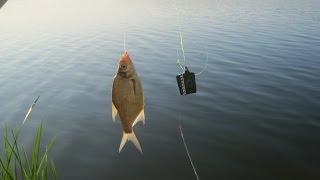 Рыбалка на леща с фидером. Лето 2015 / Bream-fishing with Feeder. Summer 2015