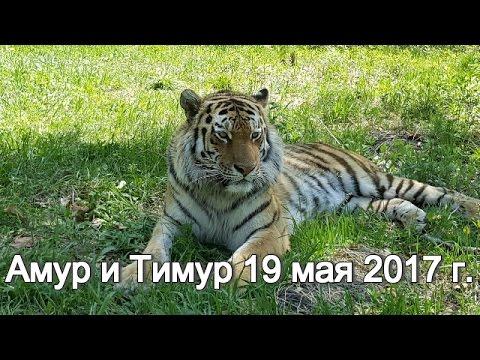 Амур и Тимур 19 мая 2017 г.