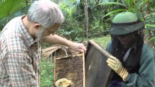 Beekeeping extension in Vietnam