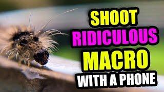 RIDICULOUS Macro Photos With your Phone