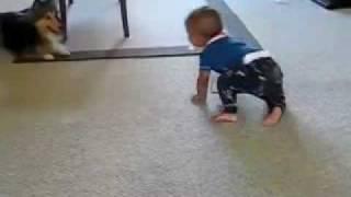 Masrawy Videohat - كلب يداعب طفل بطريقة مضحكة.flv