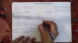 Gram Negative Clinical Classification
