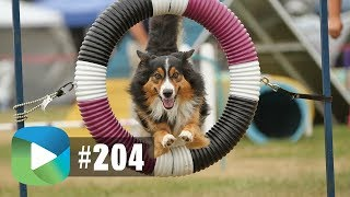 Dog Agility Competition | Studio209