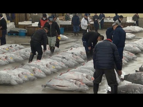 Tsukiji Fish Market Guide: Tuna Auction and Breakfast Odyssey ★ ONLY IN JAPAN #27 築地市場潜入