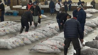 Tsukiji Fish Market Guide: Tuna Auction And Breakfast Odyssey ★ Wao✦ryu!tv Only In Japan #27 築地市場体験
