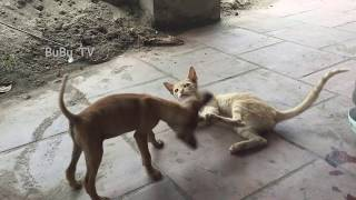 Funny Dogs and Cats | BuBu TV
