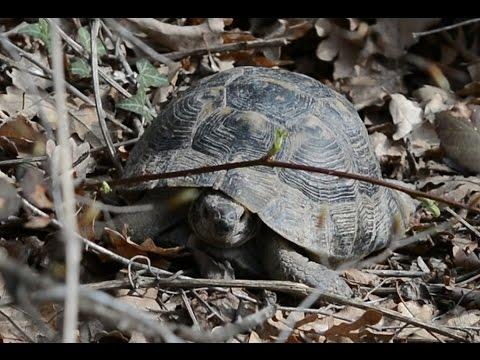 Где зимуют черепахи / Where winter turtles