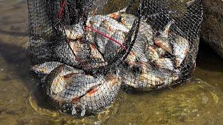 Наловил и закоптил ! Отличная Рыбалка в Купавне на Кудиновском карьере!
