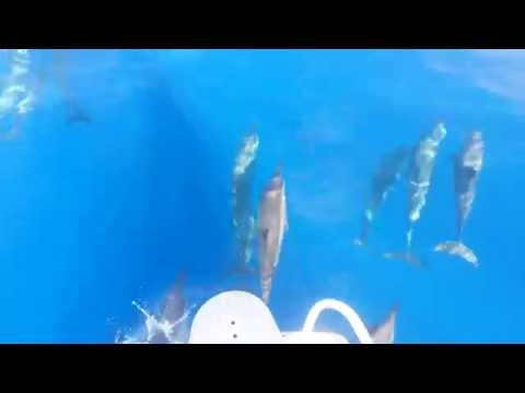 Beautiful Dolphins in the Indian Ocean near Sri Lanka - the color of the water....