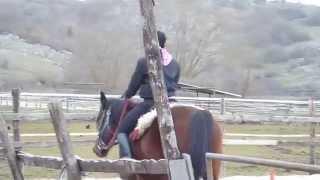 lezione cavallo 2 trotto