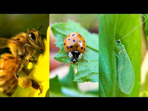 5 Beneficial Insects to Must Have in Garden