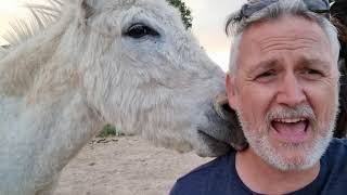 Chef Ramsay drops in and a donkey shower!