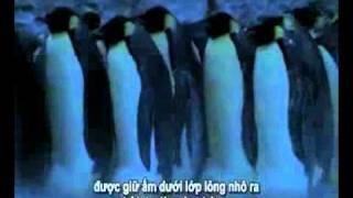 Phim Hoat Hinh | Chim canh cut o Nam Cuc | Chim canh cut o Nam Cuc