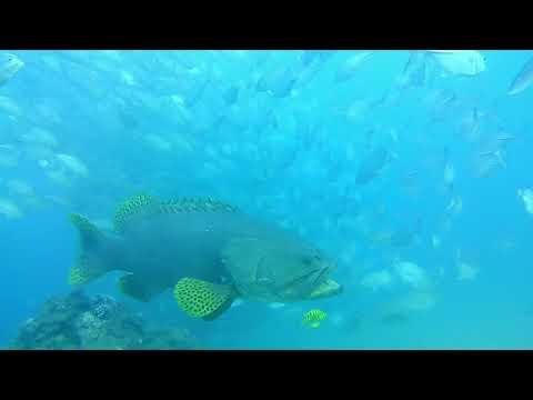 Inhaca Island Mozambique- January 2018