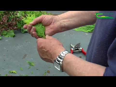 The Fundamentals of Plant Propagation by Vegetative Cuttings