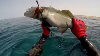 Download Video #غوص #صيد#spearfishing video KSA   2018    by Ali_smran MP3 3GP MP4