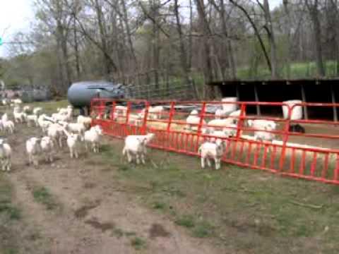Circle L Ranch Creep Feed Panels For Lambs Youtube