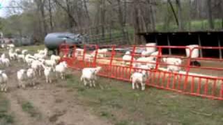 Circle L Ranch Creep Feed Panels for lambs