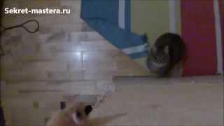 Британский кот в замедленной съемке - Cat jump slow mode