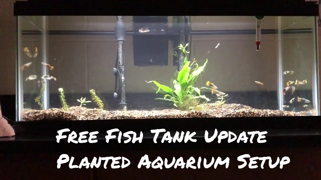 free fish tank update: now a planted aquarium with the free wild