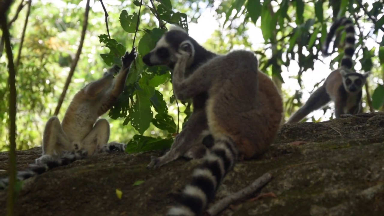 Road trip in Madagascar: driving down the RN7 - Anne Travel