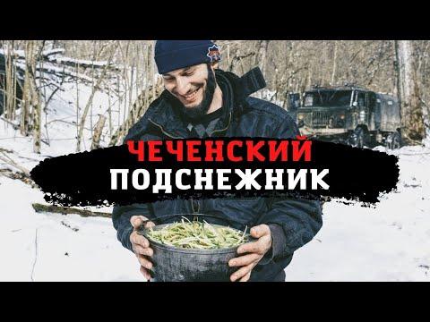 Черемша как часть культуры чеченцев
