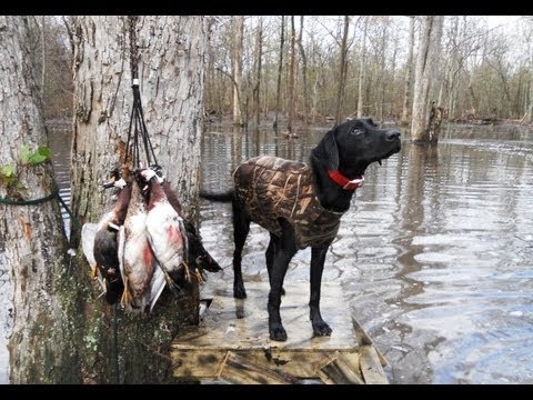 Mississippi Delta Flooded Corn Duck Hunt
