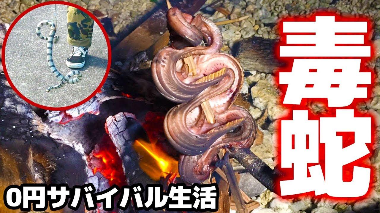 食わなきゃ死ぬ!毒ヘビを野蛮調理!【任務付き0円サバイバル生活in宮古島 #3】