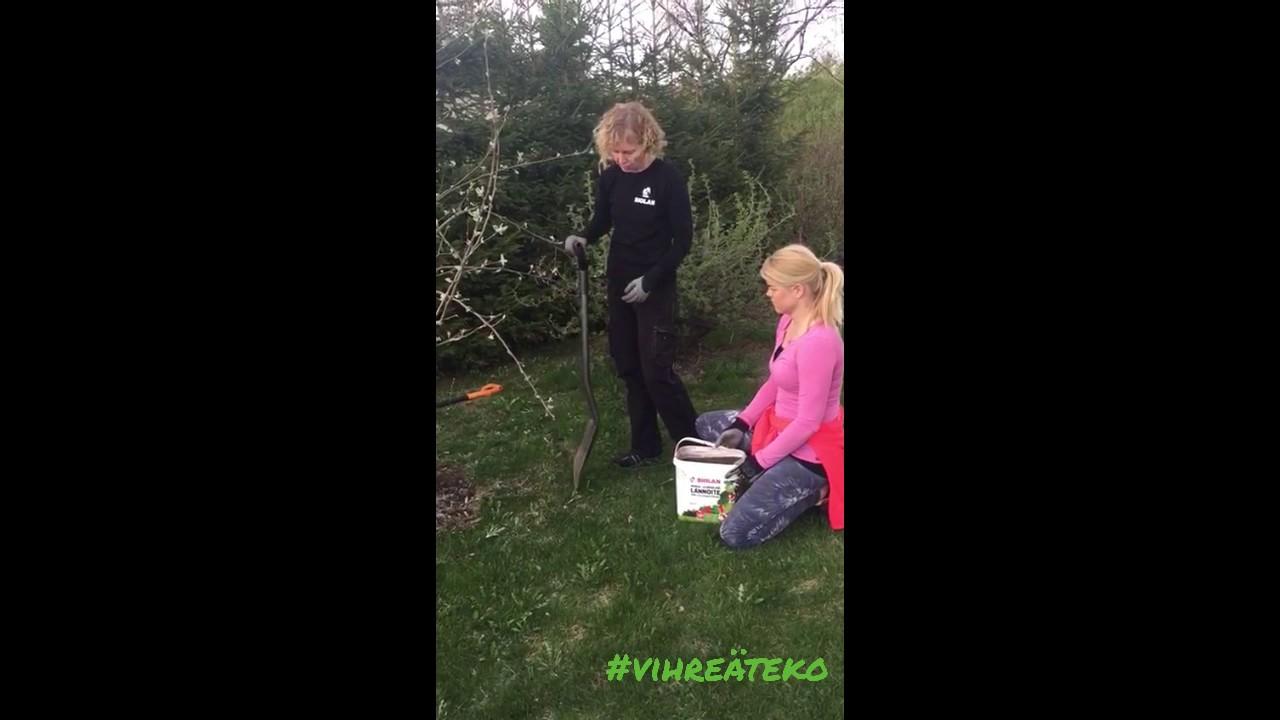 omenapuun lannoitus