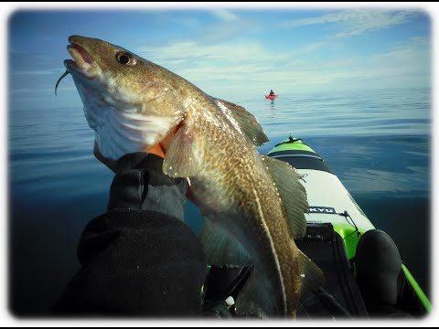 Cod And Bass . A Kayak Fishing Adventure In Scotland .