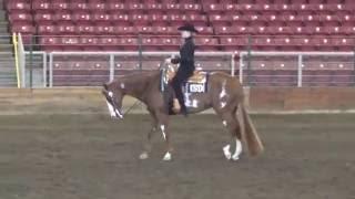 Ellie Becker Horsemanship video 5