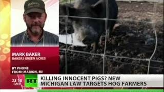 Hogwash! Authorities kill feral pigs in Michigan