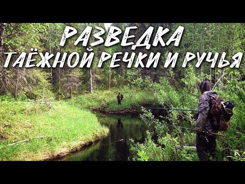 РАЗВЕДКА ТАЕЖНОЙ РЕЧКИ И РУЧЬЯ / РЫБАЛКА 2018 - YouTube