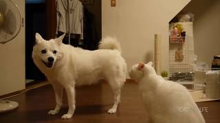 Funny Cats and Dogs Compilation #6