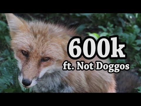Visiting Japan's Only Fox Village to celebrate 600,000 Subscribers