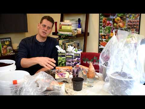 Gardening 101 Ep4: Winter Sowing, Fruit Bare Roots:  Kiwi & Blueberry, Pepper Tips, Potatoes