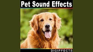 Siberian Husky Dog Barking Version 1