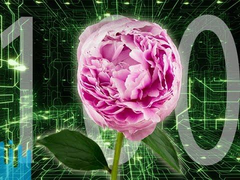 ELECTRIC PLANTS? -- Mind Blow #100
