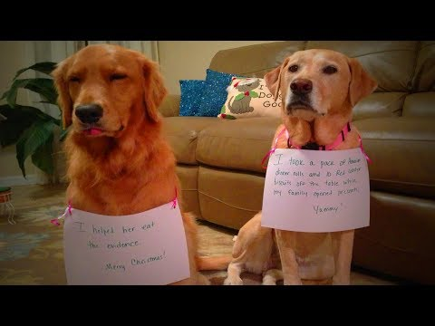 Funny Guilty Dogs 🐶😂 Funny Dogs Reactions When Caught Guilty  (Part 1) [Funny Pets]