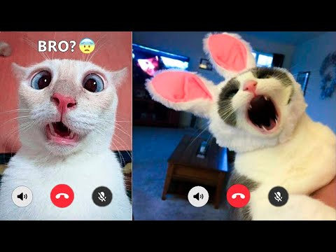 Funniest Cats And Dogs Videos 😻🐶 – Best Funny Animal Videos Of The 2021  🤣