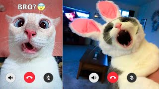 Funniest Cats And Dogs Videos   Best Funny Animal Videos Of The 2021