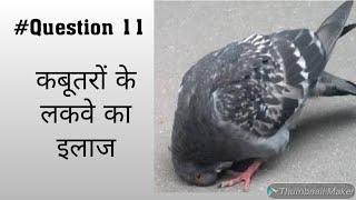 कबूतर के लकवे का 100% गारंटी से ईलाज!! pigeons ke lakwe ka 100% treatment || Pigeon Treatment