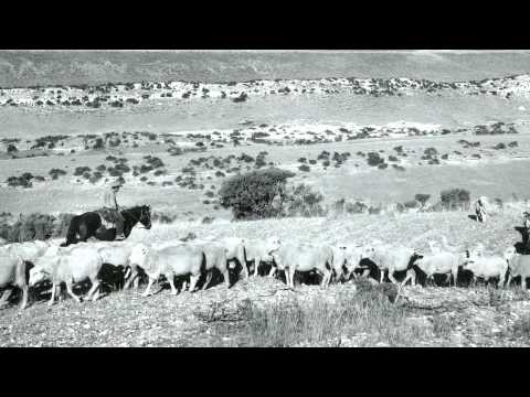 History of sheep herding in Colorado
